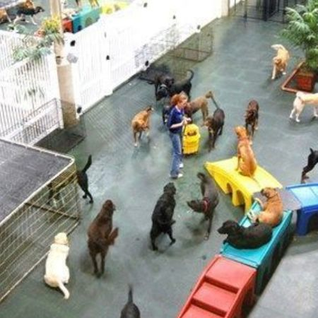 Card boasting large doggy play areas