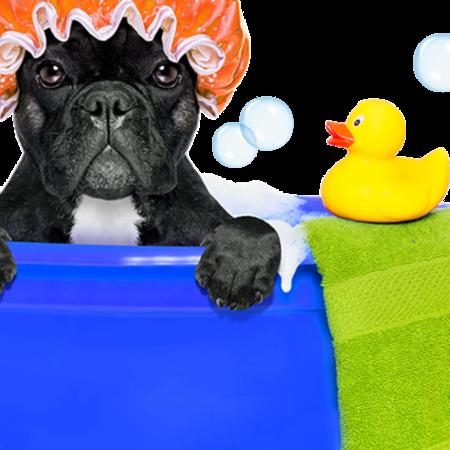 Card tub dog